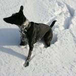 Cassie in the snow - original 3.6MB